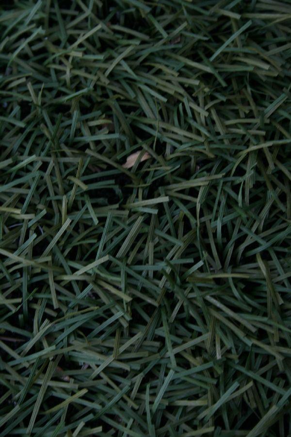 chrysomilia-demetrakis037